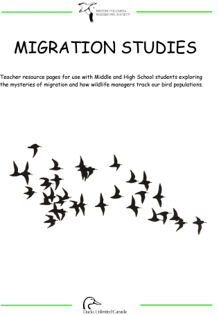 migratory birds coloring pages   New Coloring Pages   455x316